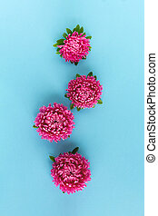 Pink flowers on blue background. Top view.