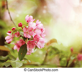 Pink flowers on branch of Apple tree