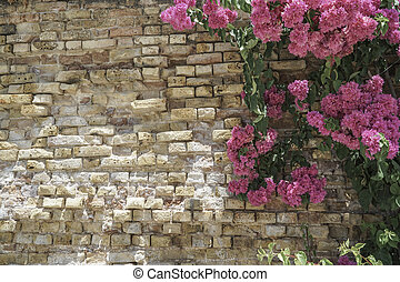 pink flowers on brick wall as a border