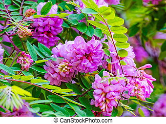 Pink flowers on green background