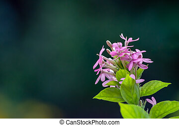Pink flowers on green leaves in background.