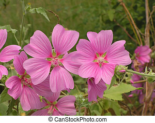 Pink flowers on row