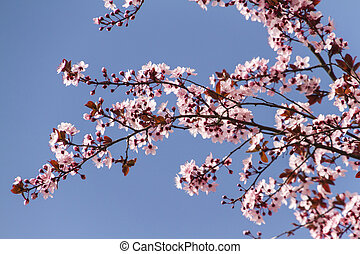 pink flowers on the tree