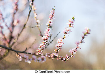 Pink flowers on the tree.