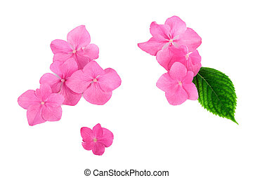 Flowers pink on white background flat lay pictures search pink flowers on white background balance spa concept mightylinksfo