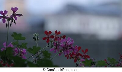 Pink flowers sway in the wind and green leaves on a sunny...