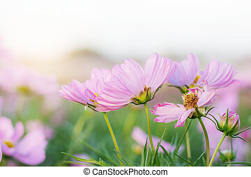 Pink flowers with beautiful.