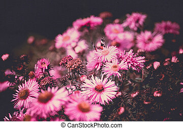 Pink Flowers with Butterfly Filtered - Small pink flowers...