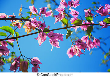 pink flowers with green leaves on sky background