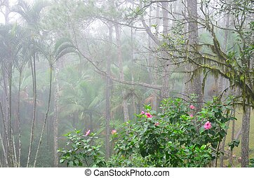 Pink flowers with jungle mist