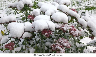 Pink flowers with snow 2