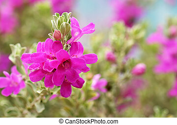pink flowers with soft background