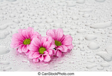 Pink flowers with water drops