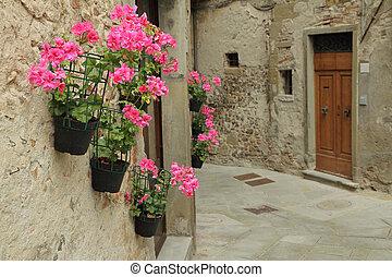 pink geranium flowers on wall