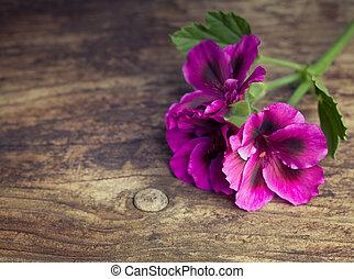 Pink geraniums on a vintage wood background