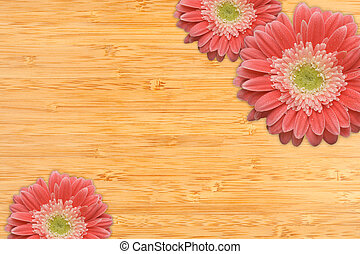 Pink Gerber Daisies with Water Drops on Bamboo Background -...