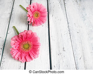 pink gerbera daisy flowers on wooden background