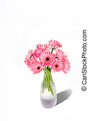 Pink gerbera flowers in vase isolated on white