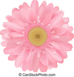 Pink Gerbera, Isolated On White Background, Vector ...