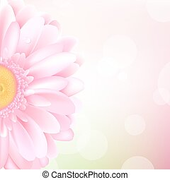 Pink Gerbera, Isolated On White Background, Vector Illustration