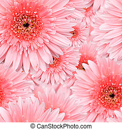 Pink Gerbera seamless pattern floral background
