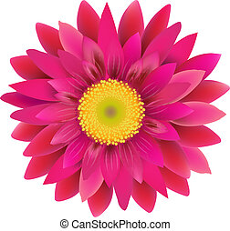 Pink Gerbera, With Gradient Mesh, Vector Illustration