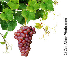 Pink grape and grapevine