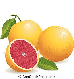 Realistic vector illustration of pink grapefruits and a half grapefruit.