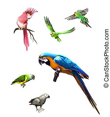Pink, Gray and green parrot, macaw, Budgerigar, Isolated...