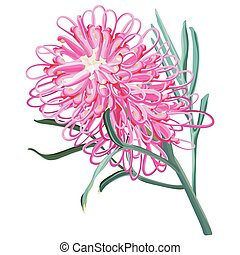 Pink Grevillea Vector Illustration isolated on white background