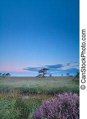 heather on marsh at sunrise