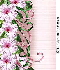 Pink Hibiscus border