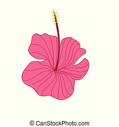 Pink Hibiscus Tropical Flower Hand Drawn Illustration