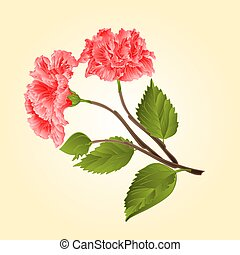 Pink hibiscus tropical flower vector.eps