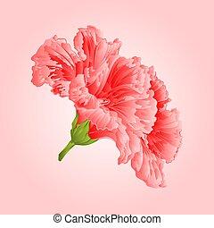 Pink hibiscus vekctor.eps