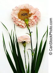 Pink Hope Carnations