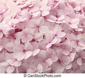 Pink hydrangea flowers - Romantic, soft and beautiful...