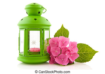 Hydrangea with green lantern