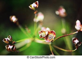 pink japanese dagwood