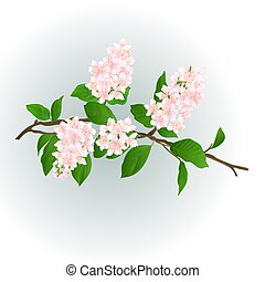 Pink lilac branch vector