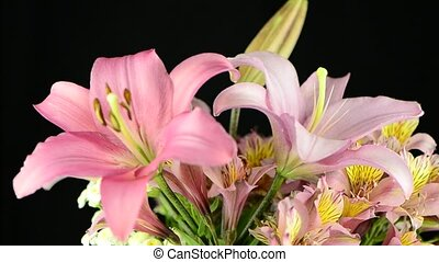 Pink lilies rotating on black background.