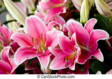 Pink lilies - Flower stand at Pike Place market, Seattle