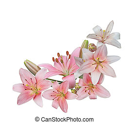 Pink Lily Bundle - Bundle of fresh pink lily flower isolated...