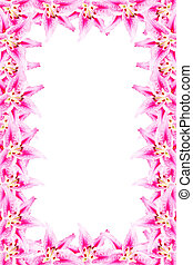 pink lily frame on white background