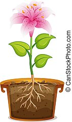 Pink lily in clay pot on white background illustration