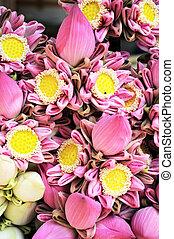 pink lotus flower in market