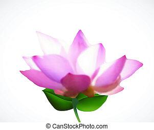 Pink lotus flower. Vector