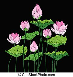 Pink lotus flower with green leaves On a black background