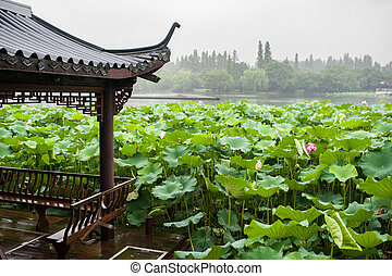 Pink Lotus Flowers on the lake. rainy day.
