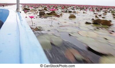 Pink lotus lake tour by boat trip